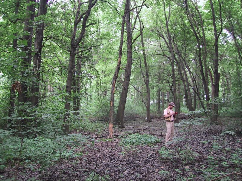 Ecologist in red maple-sweetgum swamp, Staten Island Aissa L. Feldmann