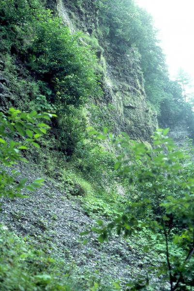 Shale cliff and talus community Stephen M. Young