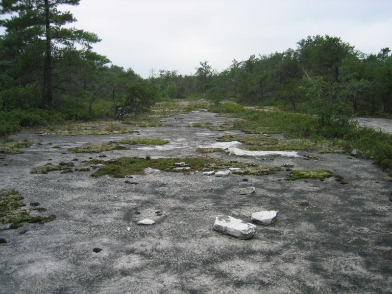 Sandstone pavement barrens at Gadway Sandstone Pavement Barrens. Gregory J. Edinger