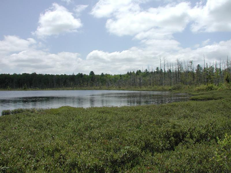 Dwarf shrub bog at Amber Lake Timothy G. Howard