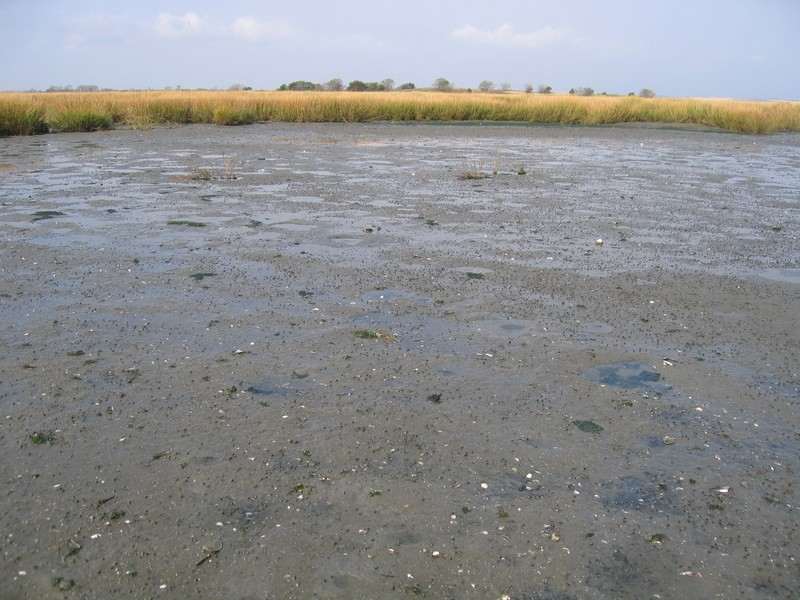 Marine intertidal mudflats in Jamaica Bay, Gateway National Recreation Area. Gregory J. Edinger