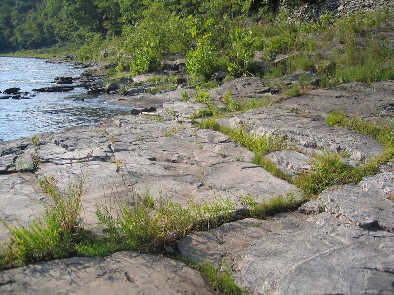 Shoreline outcrop community on the Delaware River Gregory J. Edinger