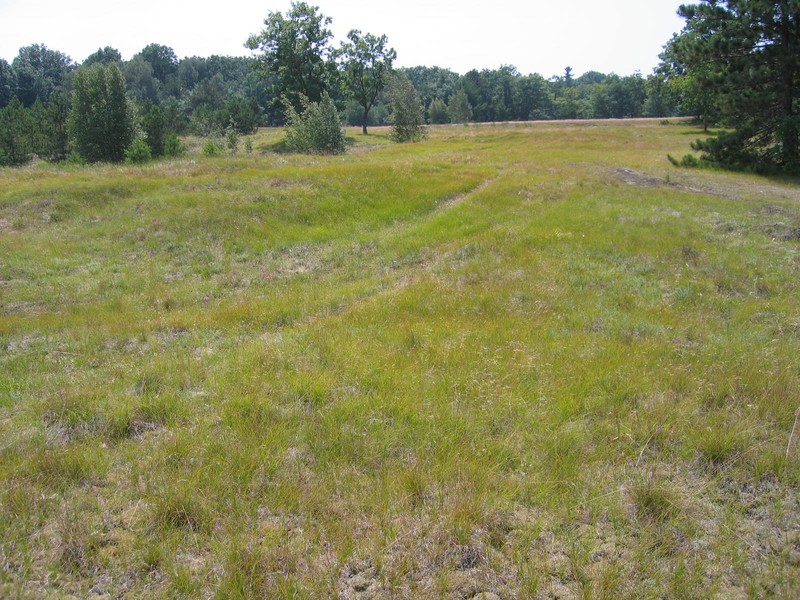 Successional northern sandplains grassland at Fort Drum Training Area 5D Gregory J. Edinger