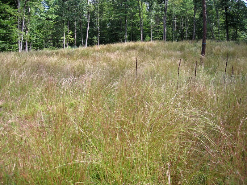 Successional northern sandplain grassland on the Grande parcel in Wilton Wildlife Preserve & Park Gregory J. Edinger
