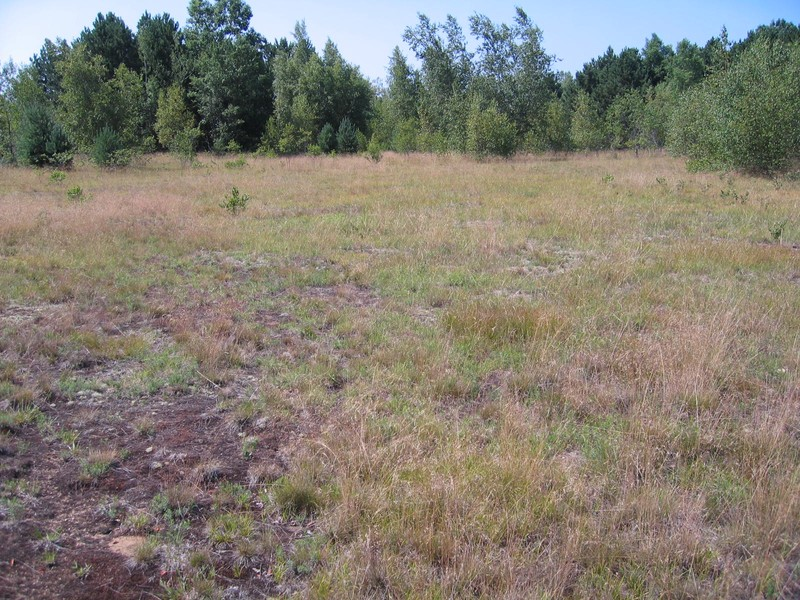 Successional northern sandplain grassland in Fort Drum Training Area 7G Gregory J. Edinger